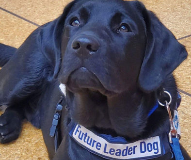 Future hero dog