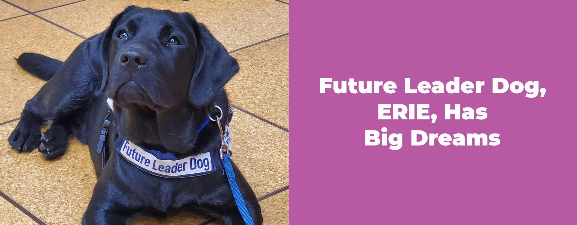 Future Leader Dog, ERIE, Has Big Dreams